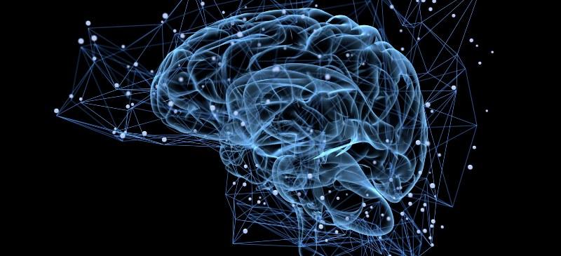 Infografía del cerebro humano.