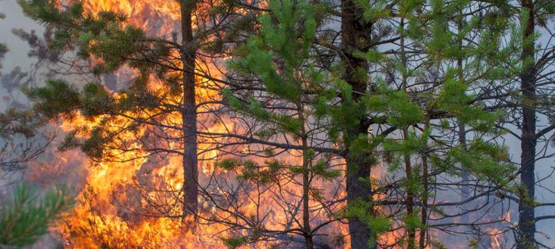 Un bosque ardiendo