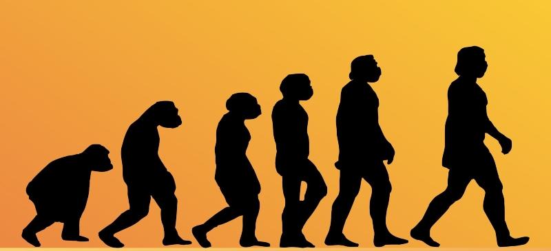 Imagen sobre la evolución de las especies desde el Lucy hasta el hombre de hoy en día.