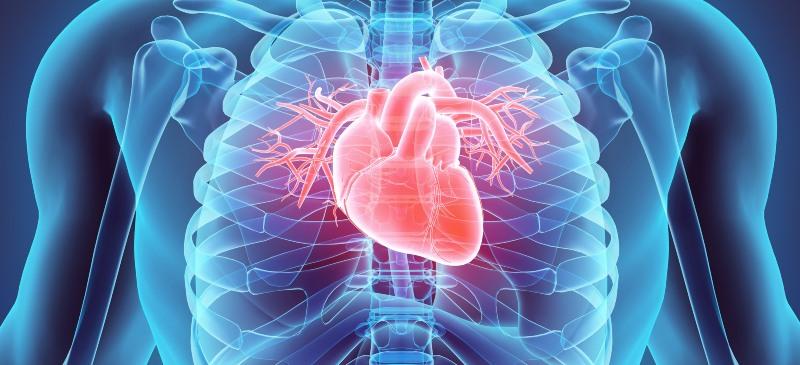 Infografía del corazón