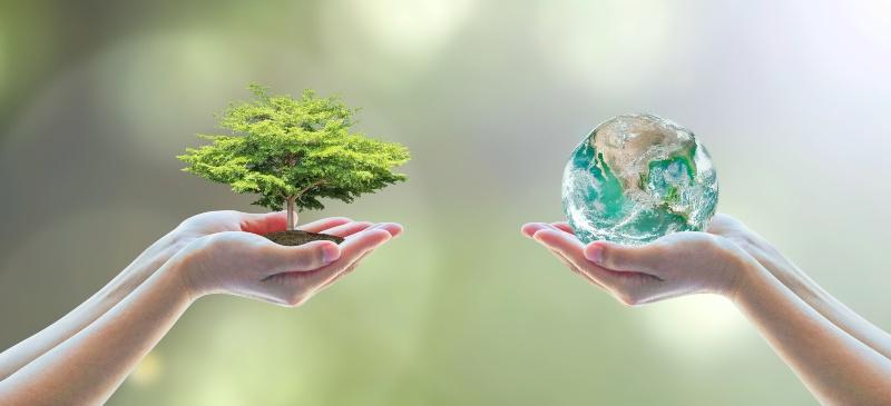 dos manos, una con un árbol y otra con la bola del mundo
