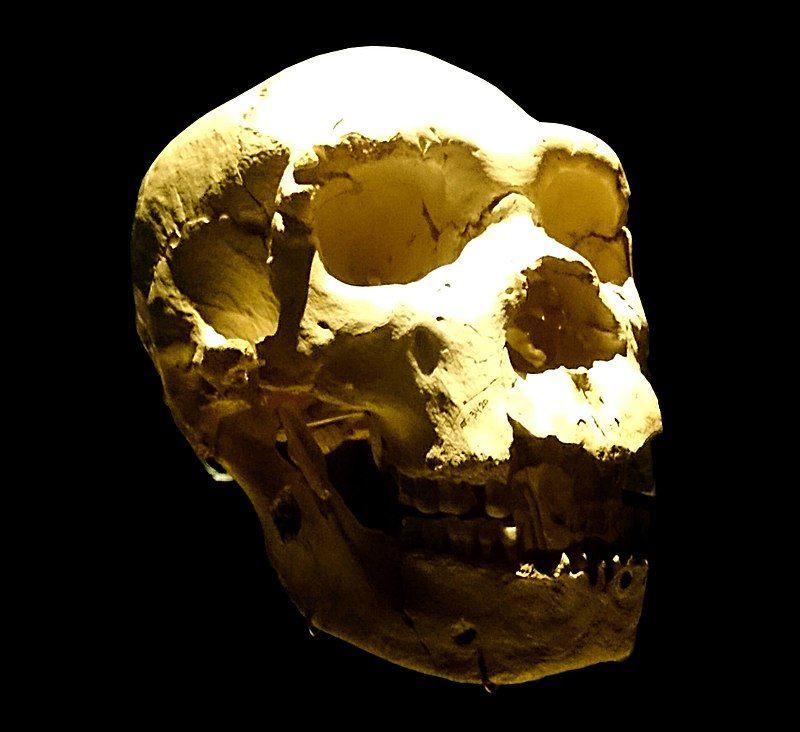 Mandíbula del cráneo de Miguelon