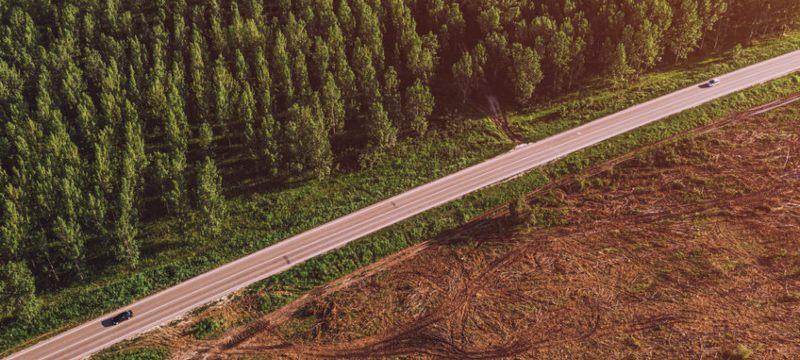 Una carretera separando un monte sano de uno sobreexplotado.