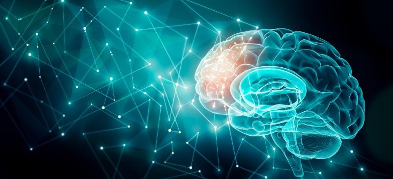 Imagen de la parte frontal del cerebro