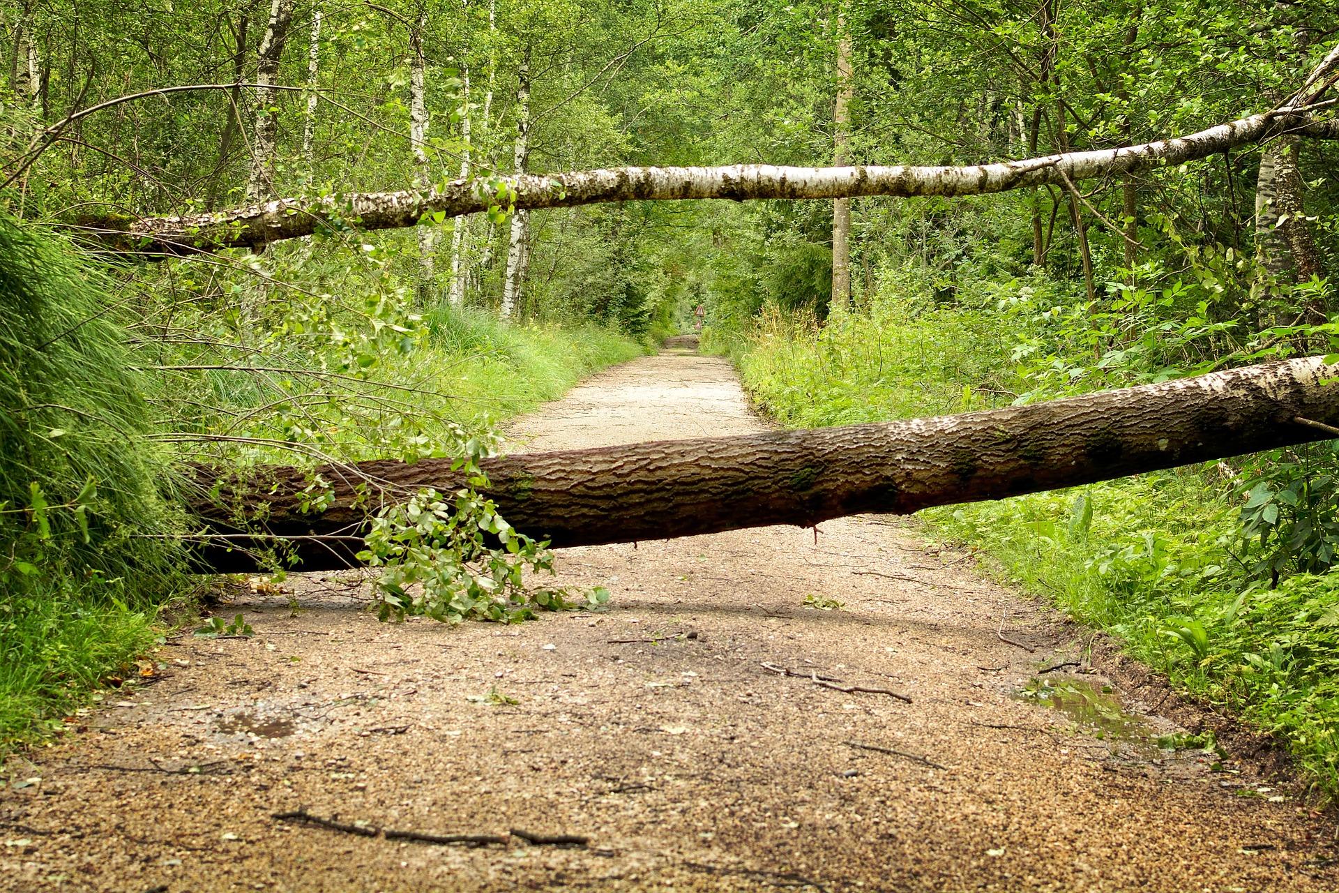 Tronco de árbol ejerciendo de barrera al paso