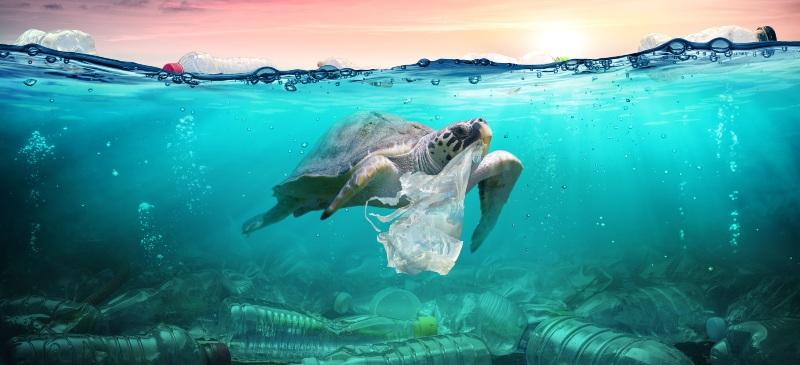 tortuga comiendo una bolsa de plástico