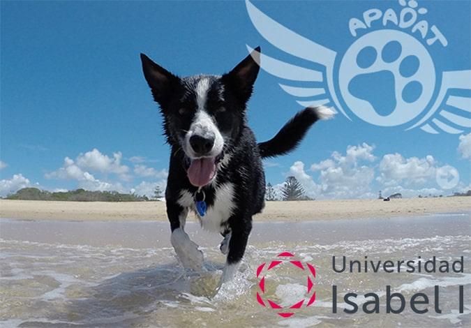 La Universidad Isabel I, con la Protectora de Animales de Toledo, Apadat