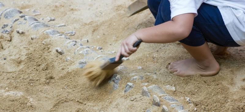 Excavación arqueológica de huesos de dinosaurio.