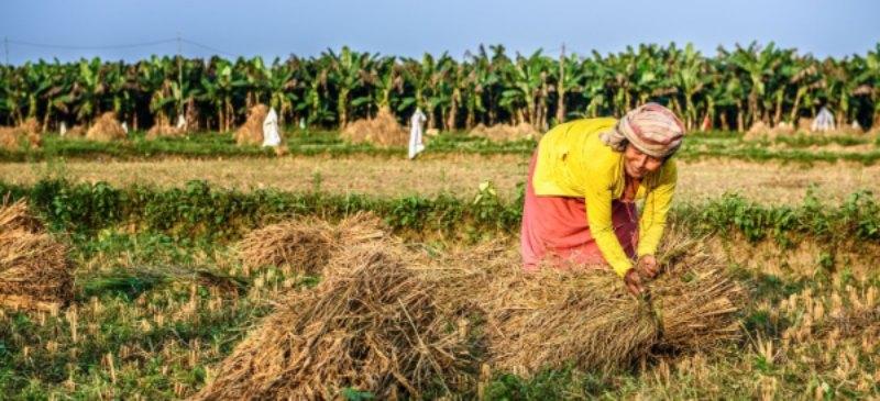 Mujer de Nepal trabajando en el campo