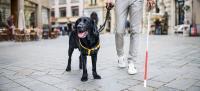 Perro lazarillo acompañando a su dueño por una calle